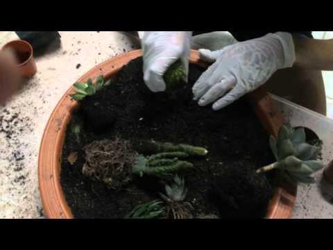 ทำสวนถาด cactus