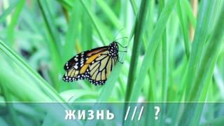 Урок 32. Природа. Упражнение 4 (1)
