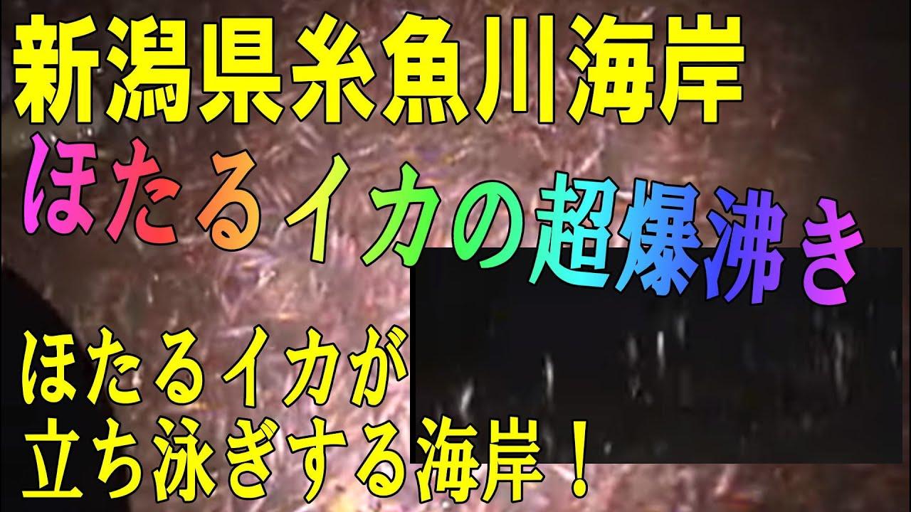 カメラ ライブ 糸魚川 姫川
