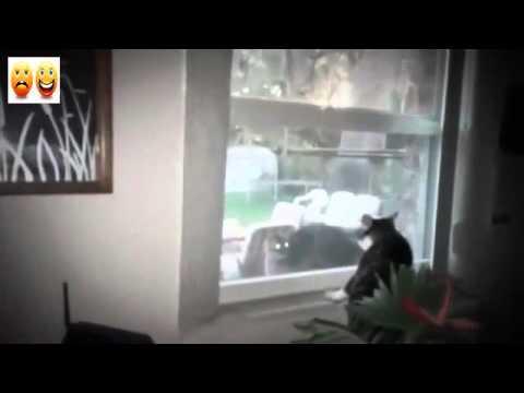Cats Fight Through Window