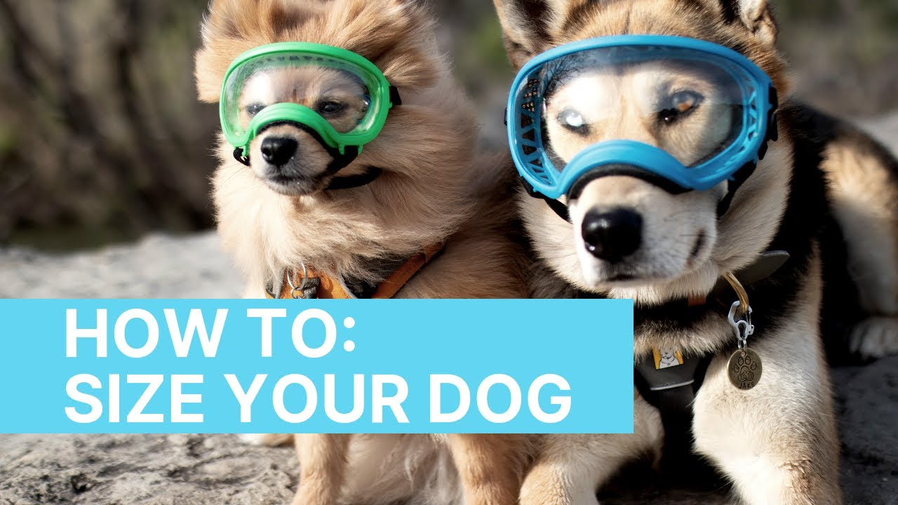 Rex Specs - Dog Goggles for the Active Dog