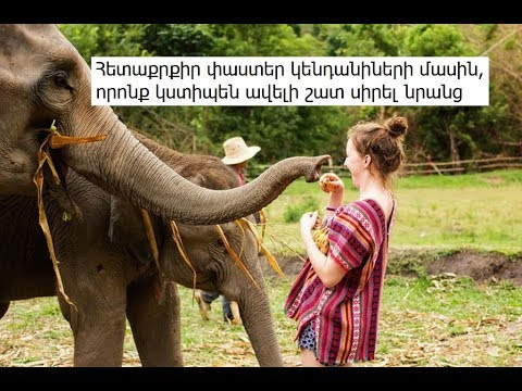 Հետաքրքիր փաստեր կենդանիների մասին, որոնք կստիպեն ավելի շատ սիրել նրանց