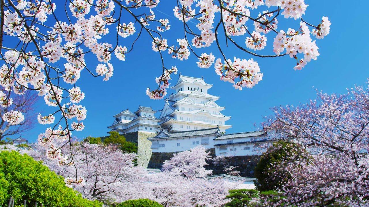 Wisteria Falls Wallpaper Wisteria In Japan Kawachi Fuji Gardens Japan Feel The