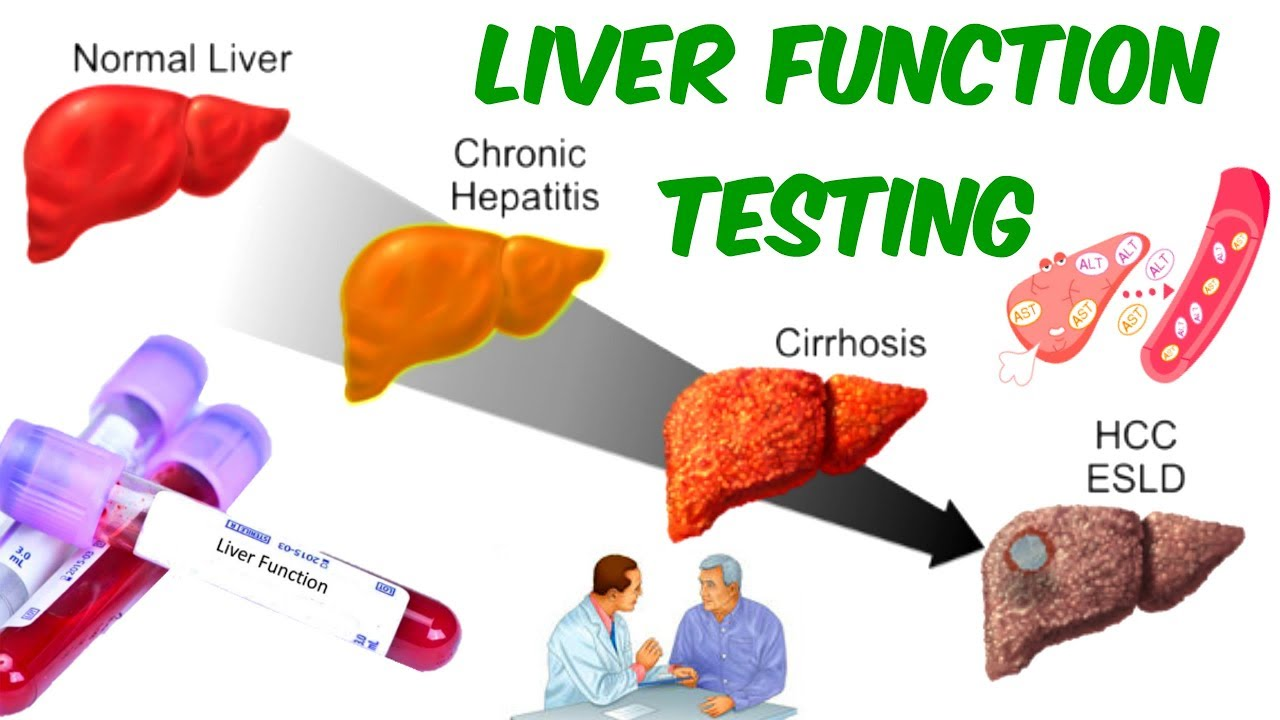 Liver Function Testing Ast Alt And Alp Is Your Liver In