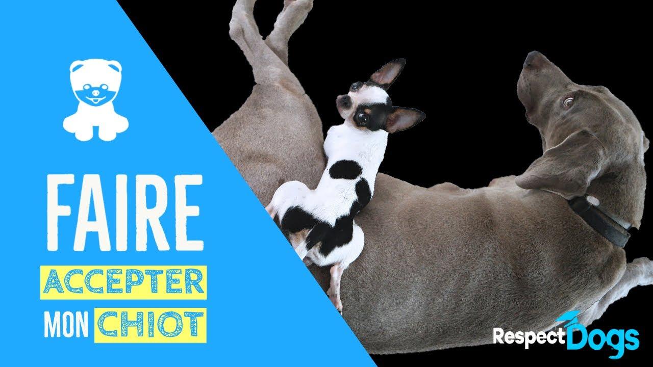 Avoir 2 chiens : conseils pour une cohabitation réussie - Dog Dog