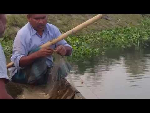 documentary wildlife fishing in Bangladesh river with a net,and boat in HD