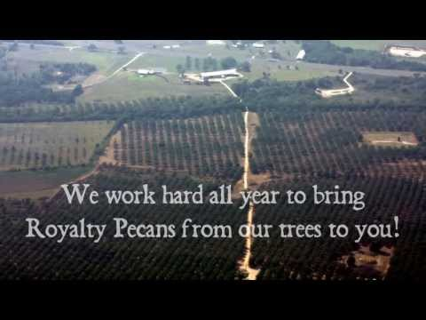 Growing & Harvesting Pecans at Texas Orchard | Royalty Pecan Farms™