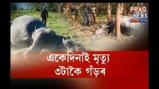 Three rhino death on a single day | Poachers kill rhino and takes away horn