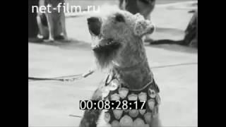 1977 г. СССР г.Смоленск - Выставка собак