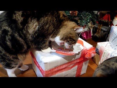 クリスマスプレゼントとまるとはな。-Christmas present and Maru&Hana.-