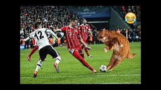 Pitch-invading: cat interrupts Istanbul Champions League between Bayern Munich and Besiktas