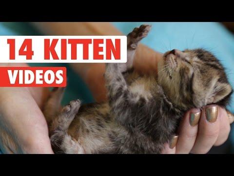 14 Kitten Videos Compilation 2016