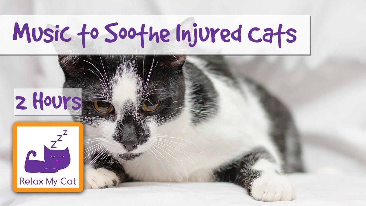 cat flea treatment comparison