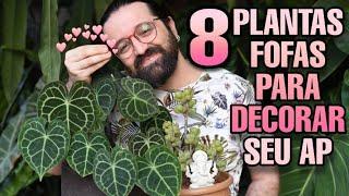 8 Plantas Fofas Para Decorar Sua Casa