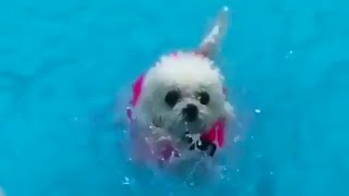 Pup Swimming towards to Bitch | Pets Special - Whatsapp Status Video | Dog in Swimming Pool
