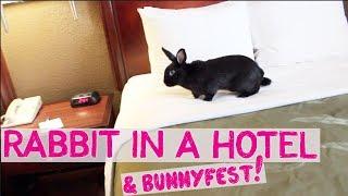 RABBIT STAYS IN A HOTEL & BUNNYFEST!