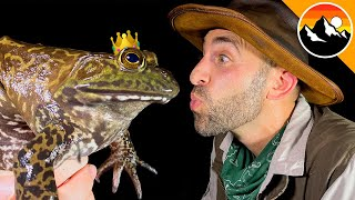 GIANT FROG KISSED! - Prince or Princess?