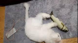 고양이 캣잎쿠션 고등어인형 뒷발팡팡