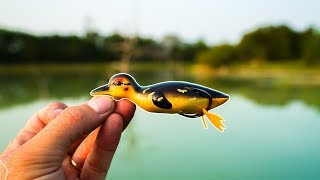 Will Fish Eat This Duck?