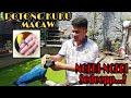 Cara Mengikir Memotong Kuku Rio Burung Macaw Blue Gold Atau Parrot Sultan Bikin Merinding Disko  Mp3 - Mp4 Download