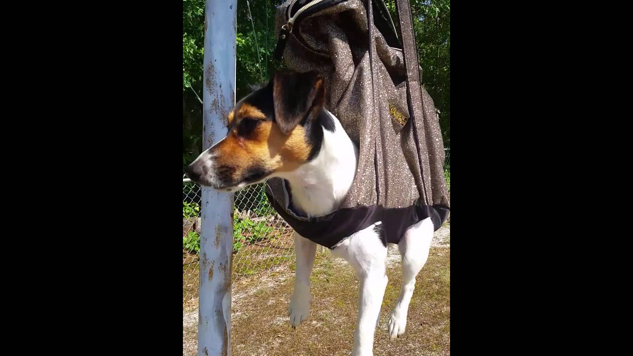 How To Make A Dog Grooming Hammock