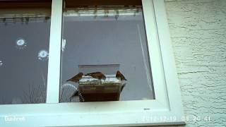 Window Bird Feeder - Sharing