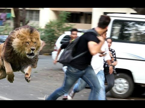 (Must watch) शेर आया प्रैंक.!! SHER AAYA PRANK | Pranks in India 2018