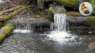 Живая Природа: Купель. Журчание Воды для Отдыха, Сна и Медитации.