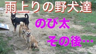 保健所から来た野犬達 のび太その後Animal Rescue Nursing