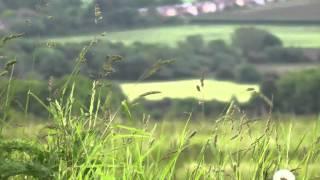 Rustling grass