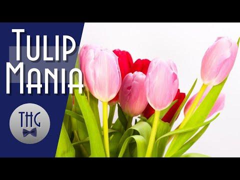 When a tulip