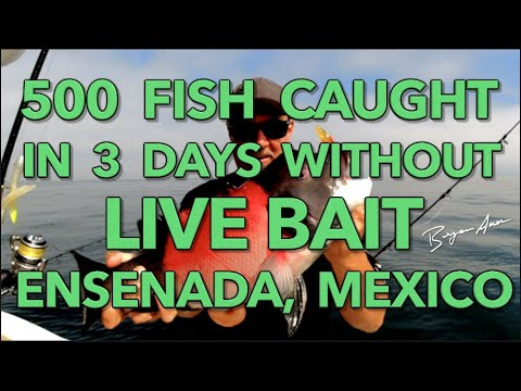 500 Fish Caught In 3 Days With NO LIVE BAIT! (Ensenada, Mexico)
