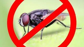 أسهل طريقة لطرد الذباب والناموس من المنزل