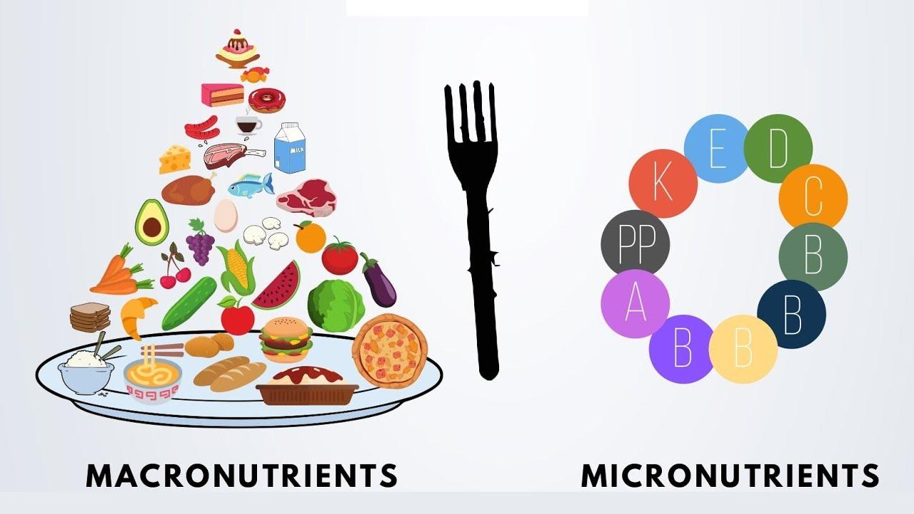 Intro To Nutrition 2 Macronutrients Vs Micronutrients Youtube