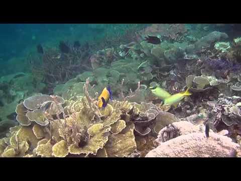 Папуа: Секретный остров каннибалов. 2013 Д/Ф - Ржачные видео приколы