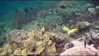 Папуа: Секретный остров каннибалов. 2013 Д/Ф