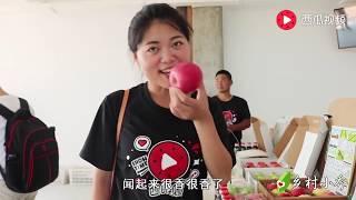 陕西杨凌:农村姑娘带你参观530亩苹果庄园,太壮观了