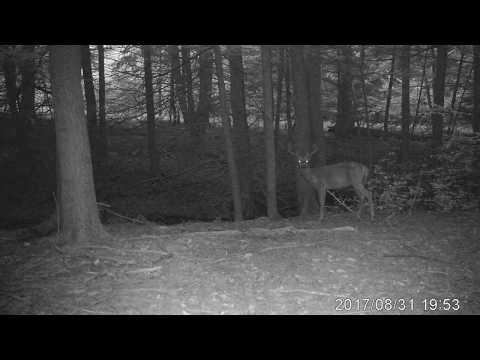 Trail Cam - Bradford County Pennsylvania Buck