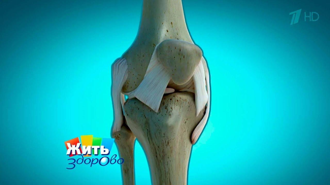Жить здорово артрит коленного сустава дисплазия тазобедренных суставов роды