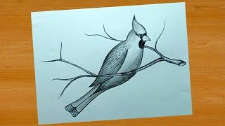 pencil drawing bird simple shading