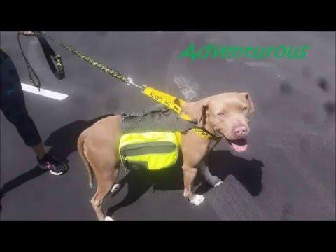 I love Pit Bulls-Adopt MaMa