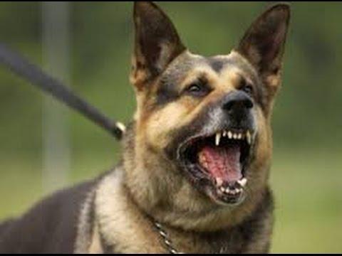 تفسير حلم رؤية قتل الكلب في المنام