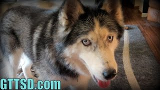 What Age To Get A Dog Fixed? | Fan Friday 166