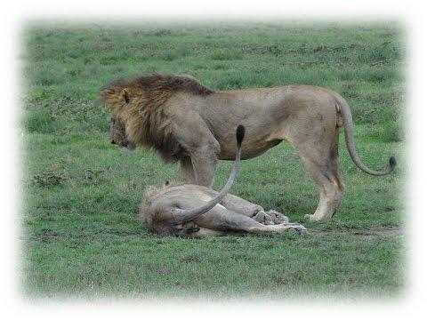 TANZANIA 2016 Part4 Serengeti