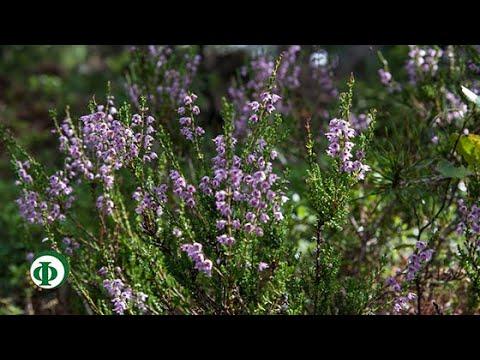 392 Вереск – средство для гладкой кожи