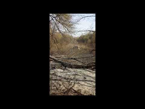 Спалений Драбівський лісопарк