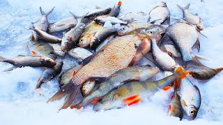 На САМУЮ ТОНКУЮ ЛЕСКУ В МИРЕ КЛЮЮТ КАБАНЫ В ГЛУХОЗИМЬЕ Зимняя рыбалка 2021 Ловля леща окуня плотвы