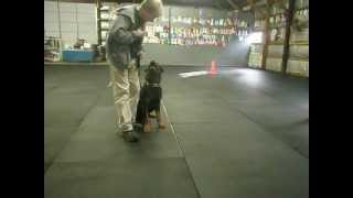 Freya and Axel - Board N Train with Allan Ross - 2012