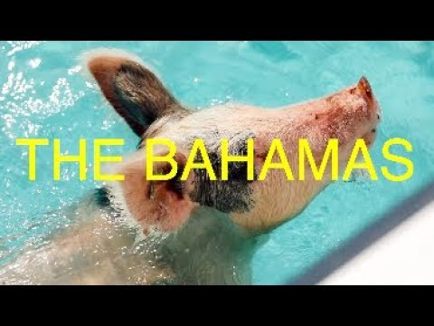 SWIMMING WITH PIGS IN THE BAHAMAS!