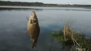 Дикое озеро Рыбалка на карася